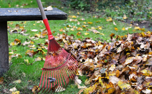 Red rake next to pile of leaves.